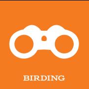 Experience231-ActivityIcons-BIRD@2x